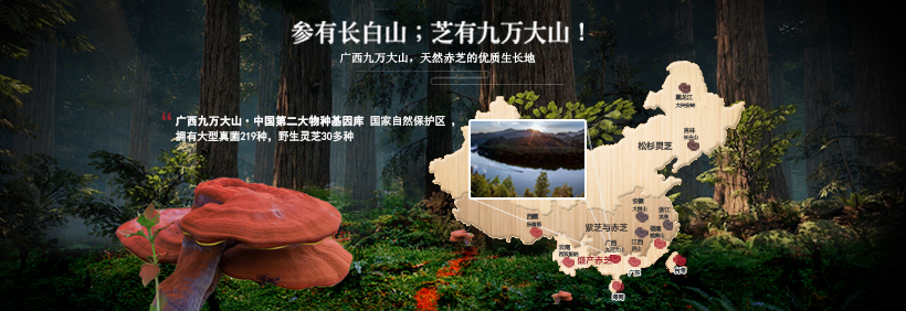 九万大山·天然赤芝的优质生长地